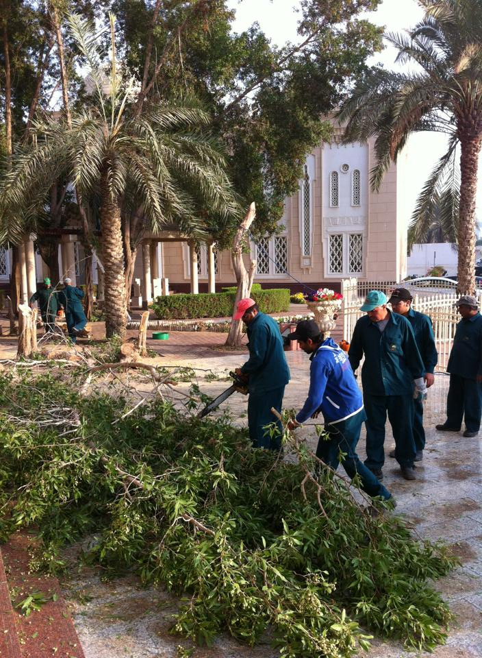 jumeira mosque tree felling